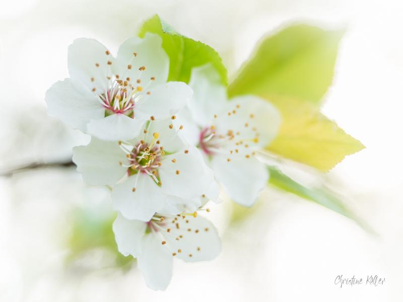 regarde voir joli mois de mai une fleur deux interpr tations. Black Bedroom Furniture Sets. Home Design Ideas